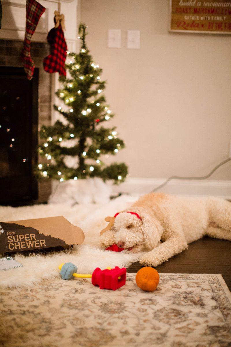 blush and camo, super chewer, dog toys